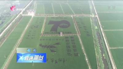 鱼台:巨幅稻田画献礼新中国70周年华诞