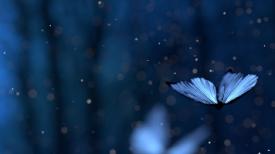 《蝴蝶泪》