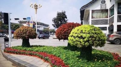 孔子文化节明日开幕!省城博会花开曲阜!花海、花雕、花球......美不胜收!