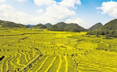 山东新增30个农业大灾保险试点县 农户担两成保费