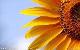 《太阳花》