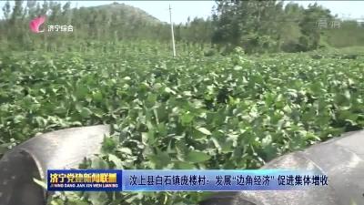 """汶上县白石镇庞楼村:发展""""边角经济""""促进集体增收"""