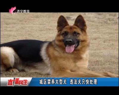 城区禁养大型犬 违法犬只快处理