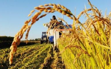 70年,中国粮食年产量增长近5倍