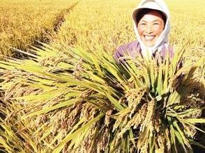丰收在望!我国秋粮生产形势总体较好 已陆续开收