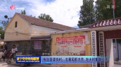鱼台县梁岗村:发展稻虾共作  壮大村集体经济