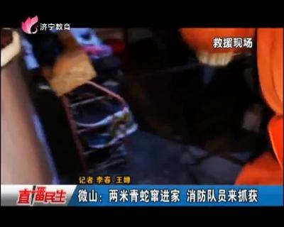 微山:两米青蛇窜进家 消防队员来抓获