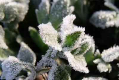 明日秋雨再次高调登场,山东最低温将降至3℃,局地有霜冻!