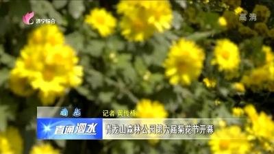 泗水青龙山森林公园第六届菊花节开幕
