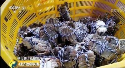 """紙螃蟹""""背後套路橫行:手裏沒有一隻螃蟹,經銷商卻賺翻"""