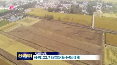 任城:22.7万亩水稻开始收割