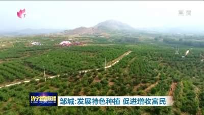 鄒城發展特色種植 促進增收富民