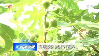 邹城:采摘乐近郊游 无花果成了致富果