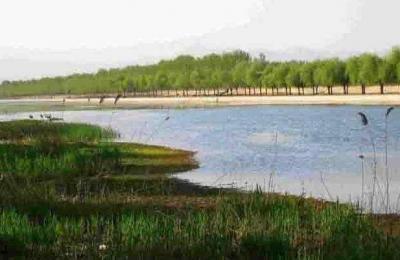 大众日报|泗河荒滩变身湿地美景