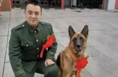 汶川地震最后一只搜救犬离世:曾救出15名幸存者