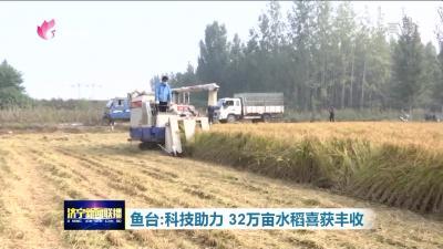 魚臺32萬畝水稻喜獲豐收 產量品質雙提升