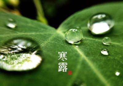 登高賞秋景、飲菊花酒……寒露習俗有哪些?