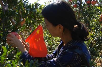 國慶假期走進石榴園 金鄉市民享受豐收的喜悅