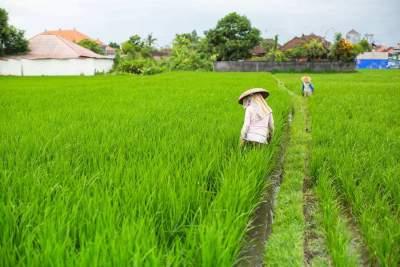 干货满满,鱼台绿色稻米论坛没白来