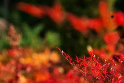 快來賞秋吧!畢竟,留給秋天打卡的時間不多了(組圖)