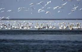 《達裏諾爾湖》