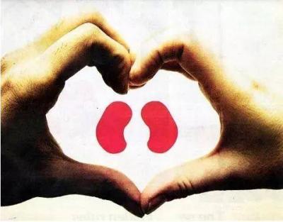 腎為人的先天之本!八項黃金準則防腎病
