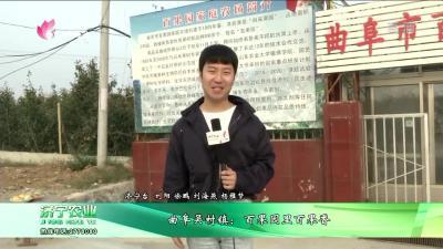曲阜吴村镇:百果园里百果香