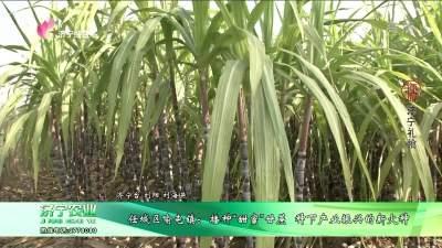 """任城区喻屯镇:播种""""甜蜜""""甘蔗  种下产业振兴的新火种"""