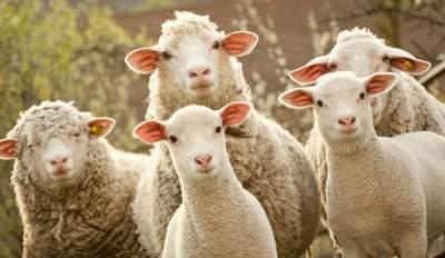"""被""""薅羊毛"""" 薅到關店 商家請收好這份誤傷自救指南"""