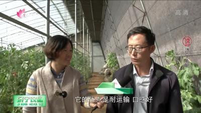 """泗水:""""西瓜大王""""吕孝东和他的合作社"""