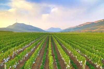 泗水县被命名为第二批国家农产品质量安全县