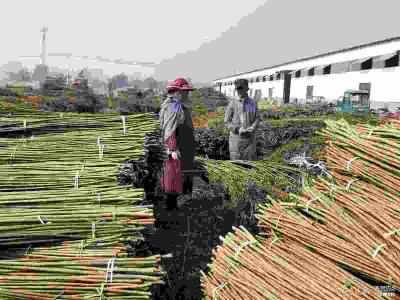 小杞柳做成大產業,魚臺柳編工藝品遠銷歐盟、東南亞