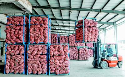今年蒜價一波三折,面積減少但產量增加