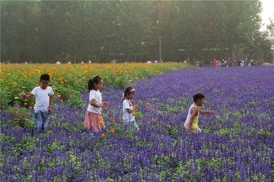 2019年中國美麗休閑鄉村名單公示,必威betway這個村莊入選