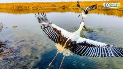 我和湿地有个约会|天津湿地 鸟类天堂