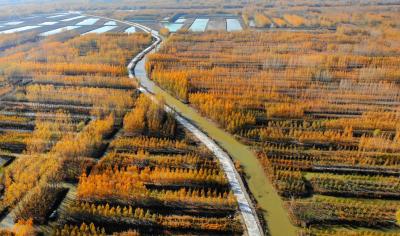 乡村振兴 | 微山第一书记修好连心路 搭起希望桥