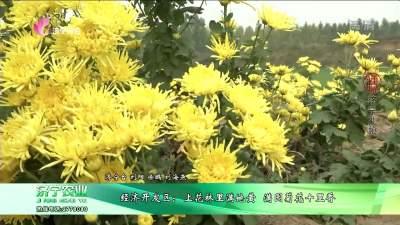 经济开发区:上花林里满地黄 满园菊花十里香