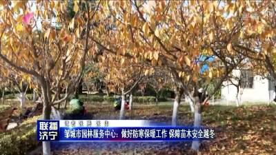 邹城市园林服务中心:做好防寒保暖工作 保障苗木安全越冬