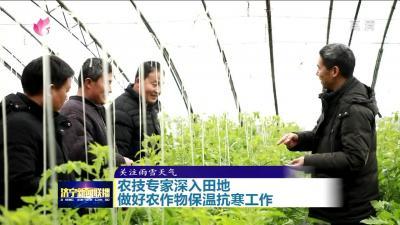 邹城农技专家深入田地 做好农作物保温抗寒工作