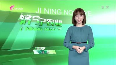 济宁农业——20200121