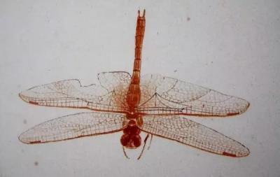 他笔下的绝色蜻蜓,惊艳了和你相视的时光