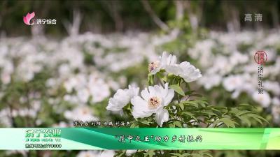 """""""花中之王""""助力乡村振兴"""