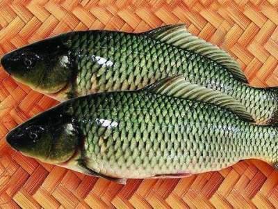 柴油会让快死的鱼变新鲜?买鱼时应注意这样