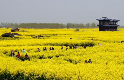 山东:形成粮食产业经济发展新动能