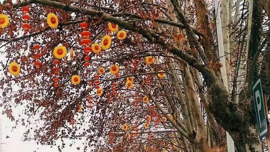 济宁市区春节亮灯工程17日正式开始!