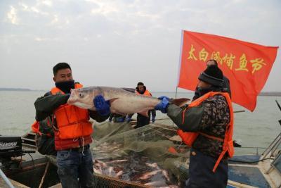 濟寧第五屆太白湖捕魚節開幕  頭魚重達83斤