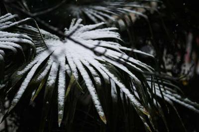 春节天气预报新鲜出炉!济宁初二前后有雨雪