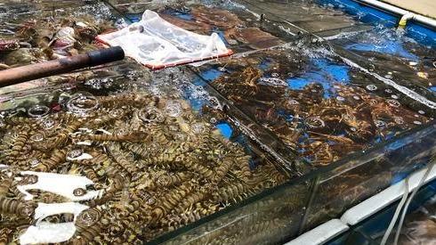 多数海鲜春节涨价 济宁人想囤年夜饭食材赶紧出手