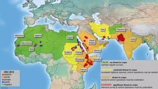 沙漠蝗会在我国大规模暴发吗?农业农村部回应