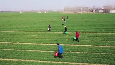邹城:点对点配送农资 助力春耕生产